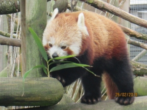 Reception Visit to Wingham Wildlife Park - Garlinge Primary School